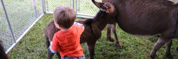 A personal favorite, baby donkey