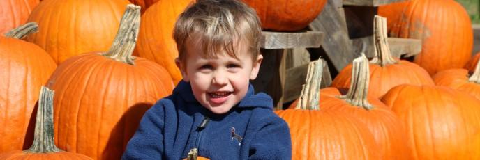 Pumpkin among the pumpkins