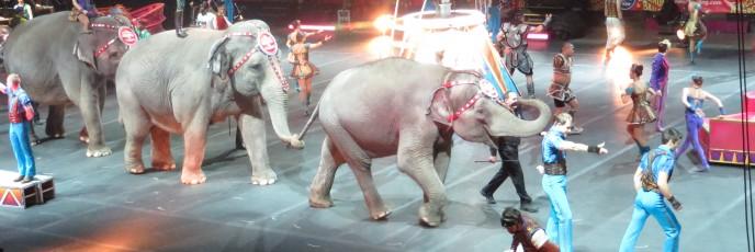 First elephant sighting